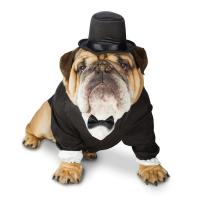 Wholesale 100% Polyester Tuxedo Halloween large Dog Formal Wear Costume for Bulldog from china suppliers