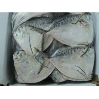 Buy cheap Frozen Moonfish Fish Whole from wholesalers