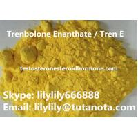 Wholesale Yellow Natural Anabolic Steroid Trenbolone Enanthate / Tren E Bodybuilding powder from china suppliers