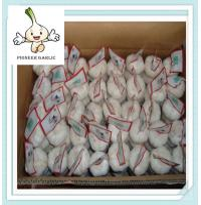 Wholesale Brand new HAITI market garlic price with best price Pure White Garlic from china suppliers