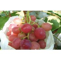 Wholesale Organic Sweet White / Green Thompson Seedless Grapes No Insect Containing High Sugar from china suppliers