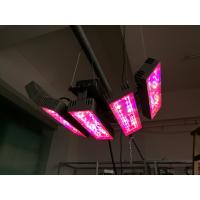 Wholesale Angle 150W led plant light with 3years warranty Meanwell driver full spetrum house color Aluminum Sliver from china suppliers