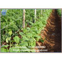 Wholesale 100% virgin material Plastic trellis net plant climbing support netting cucumber netting vine netting Pea & Bean from china suppliers