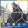 Buy cheap 15years factory stanless steel bird aviary mesh from wholesalers