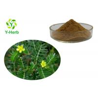 China Tribulus Terrestris Seed Extract Powder Saponins 90% 95% Protodioscin 40% on sale