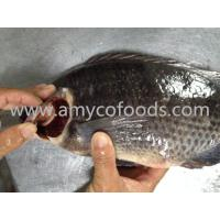 Wholesale High quality low price fozen tilapia whole round supply in China from china suppliers