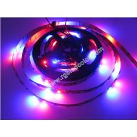 Wholesale black polish led 2812 digital rgb programmable led tape from china suppliers