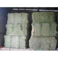 Buy cheap Alfalfa Hay from wholesalers