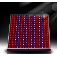 Wholesale High power 50W-3GB red, blue led hydroponic grow lights for indoor plants from china suppliers