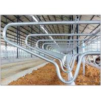 Wholesale Livestock Equipment Cow Free Stall With 80µm Galvanizing Layer , Customized from china suppliers