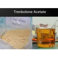 Wholesale Powder Anabolic Trenbolone Acetate Steroid / Pharma Raw Materials For Muscle Bulking from china suppliers