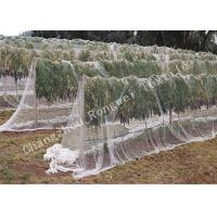 Wholesale 45gsm 10mm Hexagon Mesh Anti-bird Net for Grapes / Heavy Duty Woven Garden Netting from china suppliers