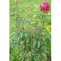 Iron steel plant support for beautiful pink peony flowers