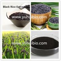 Wholesale black rice extract supplement,purple rice powder,purple rice extract from china suppliers