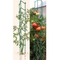 Two green PVC coated ladder supports for tomatoes