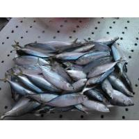 Wholesale Frozen WR Indian Mackerel Fish For Marketing with Good Quality. from china suppliers