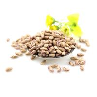 Wholesale Wholesale cheap price  light speckled kidney beans sugar bean pinto bean for export from china suppliers
