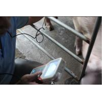 Quality mini ultrasound portable made in China ultrasound veterinary for sale