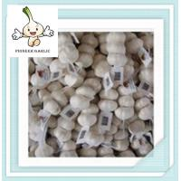 Wholesale Top quality fresh white garlic ,pure white -normal white 5.0CM Mesh Bag In Carton from china suppliers