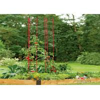 Wholesale Metal Garden Tomato Plant Stakes  Pack size  L73 Pack size  h 36 Tall or Towering, You Need Our Ladder Trellis from china suppliers