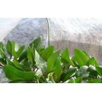 Wholesale White Agriculture PP Spunbond Nonwoven Fabric with UV Treatment from china suppliers