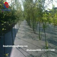 China Weedmat Fabric Anti Weed Mat/Weed Control Mat Ground Cover Plant Nursery groundcover/pp landscaping fabric on sale
