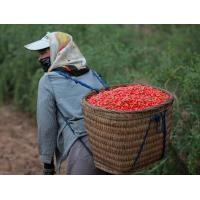 Wholesale 650 grains / 50g Thick Red Wolfberry Goji Berry Dried Sweet Taste SDG-R650 from china suppliers