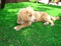 Wholesale Eco friendly soft landscaping artificial grass pets from china suppliers