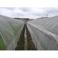 Buy cheap Anti Insect Net 50x35mesh,growing and agriculture using,greenhouse using  50-140g/m2  0.5m-6m width   black,white from wholesalers