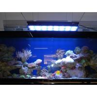 Wholesale Apollo Aquarium LED Light for Coral (Apollo-10) from china suppliers