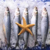 Wholesale Wholesale BQF Good quality frozen food sardine with 200-300g on Landing. from china suppliers