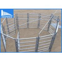 Wholesale Galvanized Square Welded Wire Cattle Panels , Farm Fence Panels 40*40*1.6mm from china suppliers
