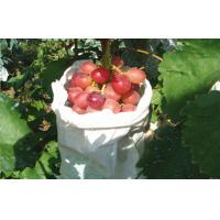 Wholesale Edible Vine Table Red Globe Grapes Containing Anthocyanins Health-Protective from china suppliers
