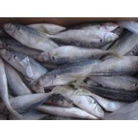 Wholesale New Arrive High Quality Whole Frozen Fish Horse Mackerel For Market With 4-6pcs/kg Size. from china suppliers