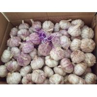 Quality chinese garlic with lower price for sale