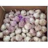 Buy cheap Preço do alho chinês from wholesalers