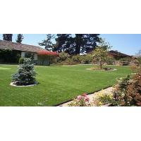 Quality Landscaping Artificial Grass for sale