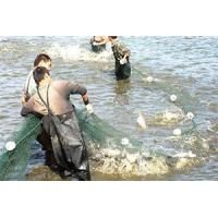Wholesale Polyethylene Fishing Net, Commercial Fishing Nets from china suppliers