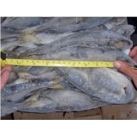 Buy cheap BQF Light Caught Frozen Horse Mackerel Wholesaler from wholesalers