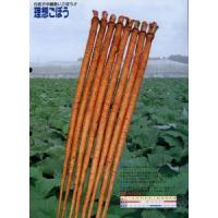Wholesale Fresh New Burdock from china suppliers