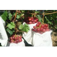Wholesale Sweet Juicy Red Globe Grapes Containing Protein , Mineral Substance from china suppliers