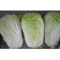 Buy cheap No Rotten Chinese Napa Cabbage / Bok Choy Contains Vitamin K , C , ISO 9001, The leaf surface smooth from wholesalers