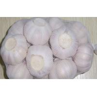 Wholesale 5.5cm Natural Organic Fresh Garlic For Infections Treatment , Not Broken from china suppliers