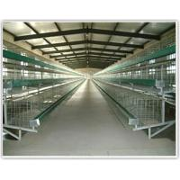Quality poultry farming cages for sale