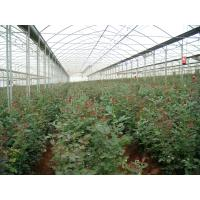 Wholesale clear plastic sheet ,max widht 14m ,100um-200um greenhouse film from china suppliers