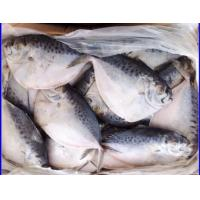 Wholesale 2015 Frozen Sea Caught Moonfish from china suppliers