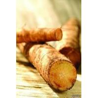 Wholesale Natural Burdock Root from china suppliers