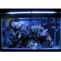 Wholesale Acrylic Home Aquarium Tanks from china suppliers