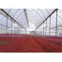 Wholesale Transparent Greenhouse Coverings Polyethylene Film Prevent Dripping Onto Plants from china suppliers