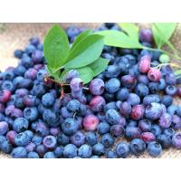 Wholesale bilberry fruit extract powder anthocyanins from china suppliers